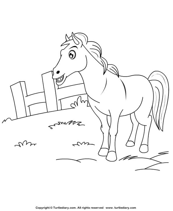 Color a Horse