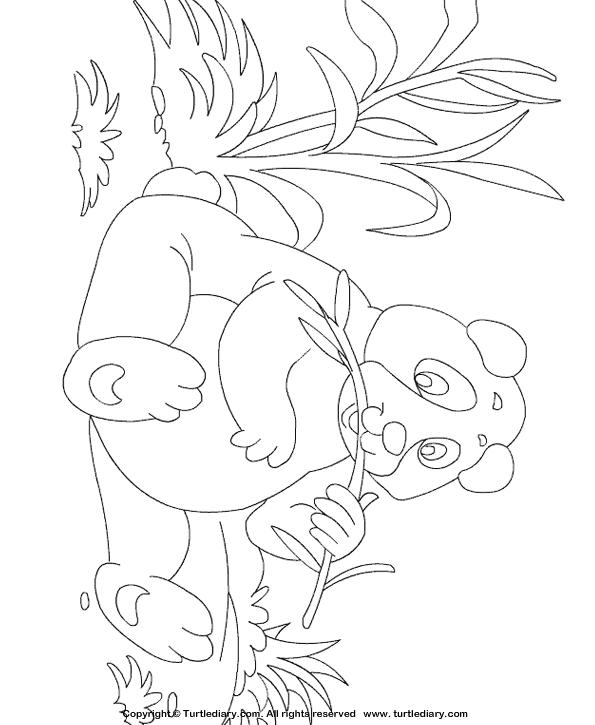 Panda Coloring Page