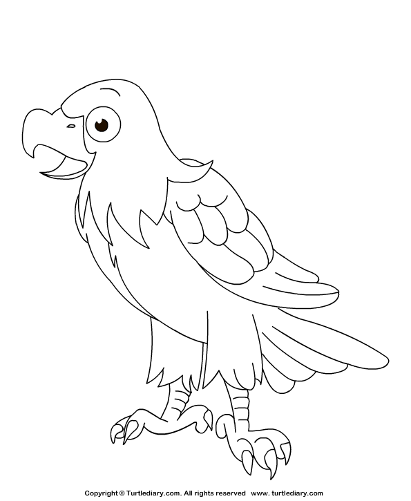 bird and coloring pages and eagle | Eagle Coloring Sheet | Turtle Diary