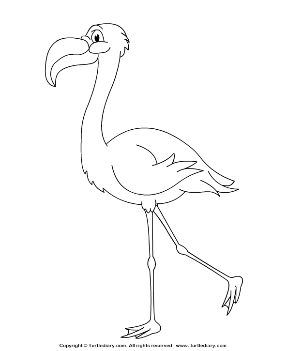 Flamingo Coloring Page
