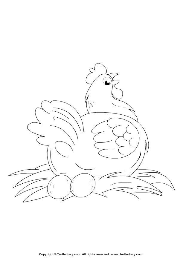 Hen Coloring Sheet Turtle Diary