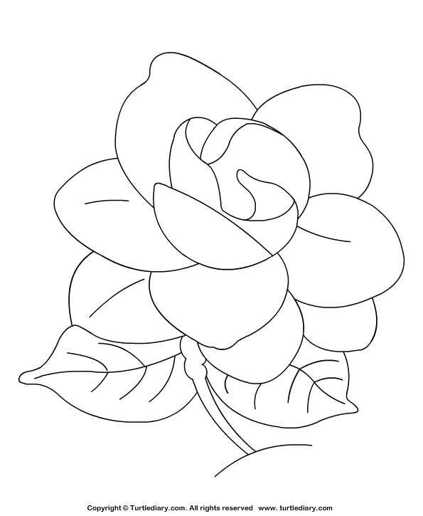 Gardenia Coloring Page
