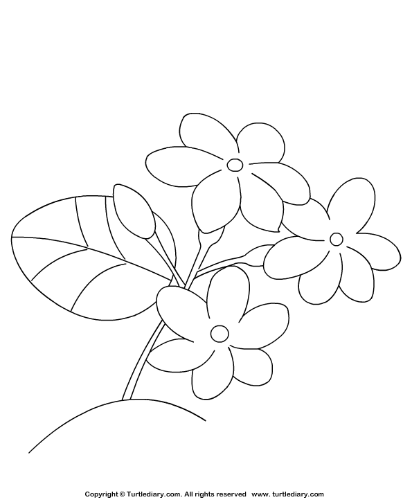 Jasmine Coloring Page