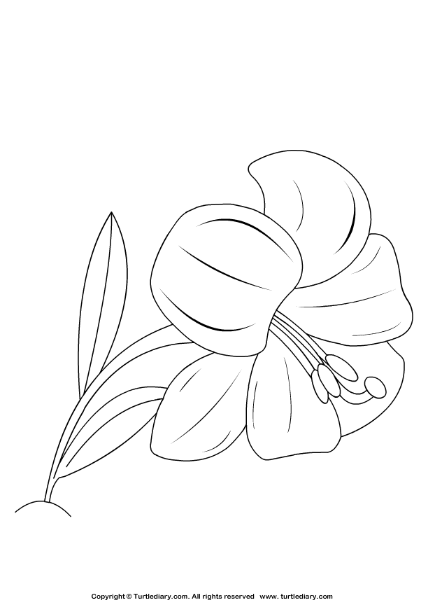 Lilly Coloring Page