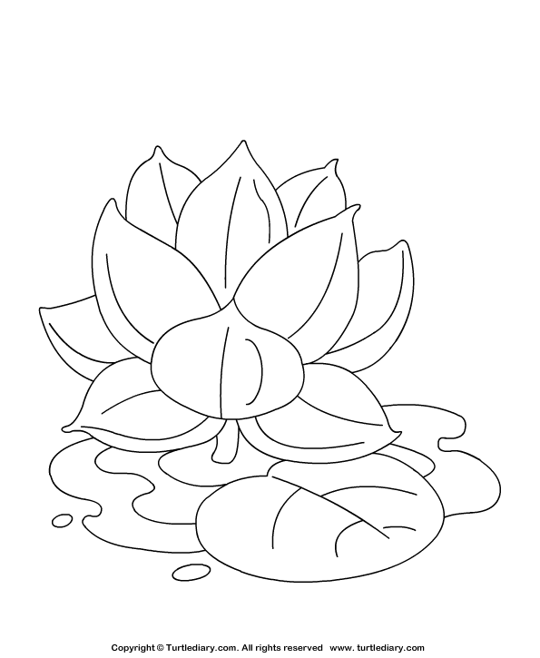 Lotus Coloring Page Coloring sheet Turtle Diary