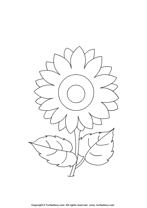 sunflower coloring pages craft - photo#20