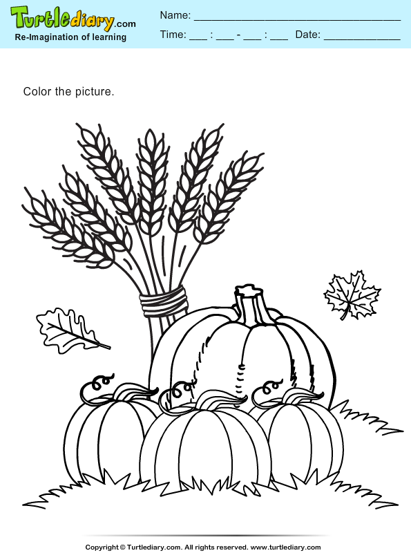 Color Pumpkins