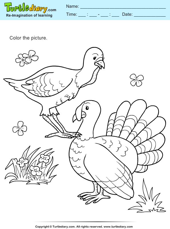 Color Turkey and Hen