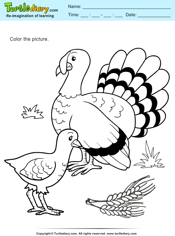 Color Turkeys