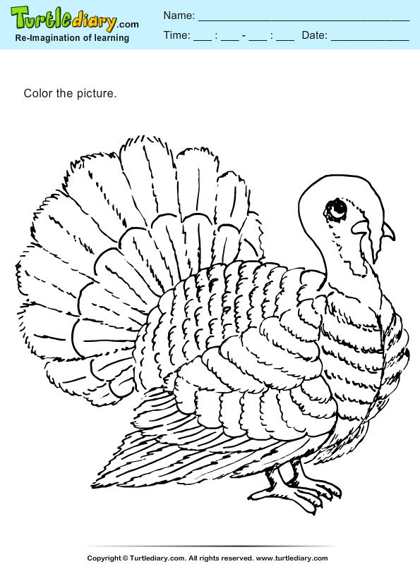 Thanksgiving Coloring Turkey