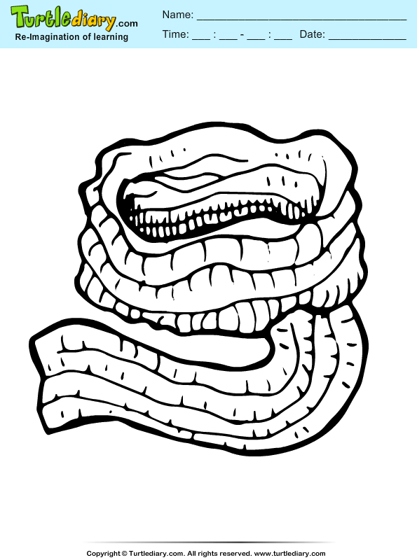 Scarf Coloring Page