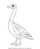 Color a Goose