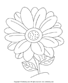 Color Daisy