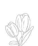 flowers - Preschool