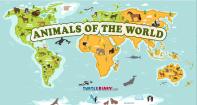 Animals of the world - Animals - First Grade