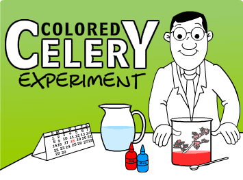 graphic about Celery Experiment Printable Worksheet referred to as Coloured Celery Experiment Science Studies for Small children