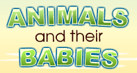 Animals and their Babies - Animals - Kindergarten