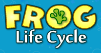 Frog Life Cycle - Animals - First Grade