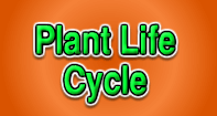 Plant Life Cycle - Plants - First Grade