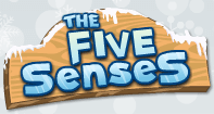 The Five Senses - The Human Body - First Grade