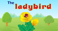 Comprehension- The Ladybird - Reading - First Grade