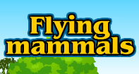 Flying family - Animals - Second Grade