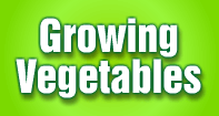 Growing Vegetables - Plants - Third Grade