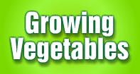 Growing Vegetables - Plants - Third Grade