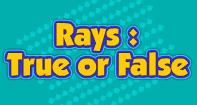Rays : True or False - Geometry - Third Grade