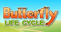 Butterfly Life Cycle - Animals - Kindergarten
