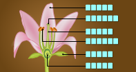 Parts of a Flower Labeling - Plants - Fourth Grade