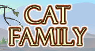 Cat Family Part 1 Video