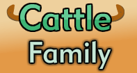 Cattle Family Part 2 Video