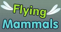 Flying Family Video
