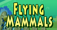 Flying Mammals Video
