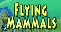 Flying Mammals Video