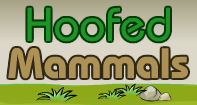Hoofed Mammals Part 2 Video