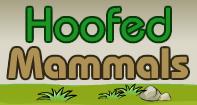 Hoofed Mammals Video