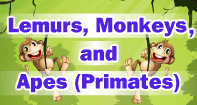 Lemurs, Monkeys, and Apes Video