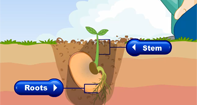 The Life Cycle of Plants Video