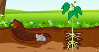 What Is Soil? Video