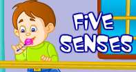 The Five Senses Video