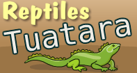 Reptiles Tuatara Video