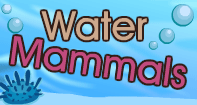 Water Mammals Video