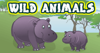 Wild Animals Video