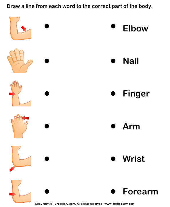 Body Parts Worksheet4