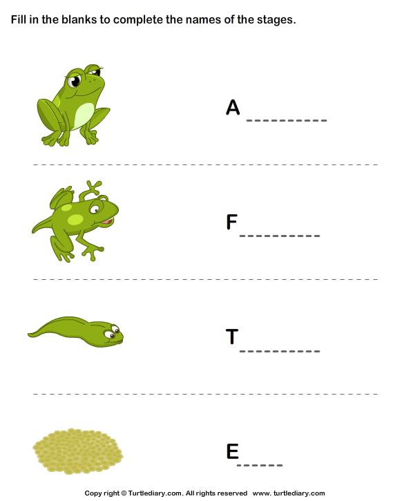 Frog Life Cycle Worksheet2