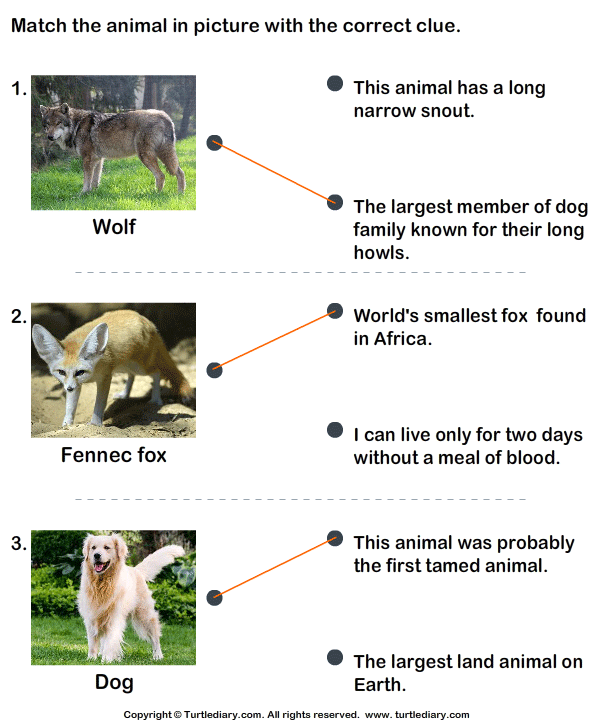 Match the Animals with Their Features Answer