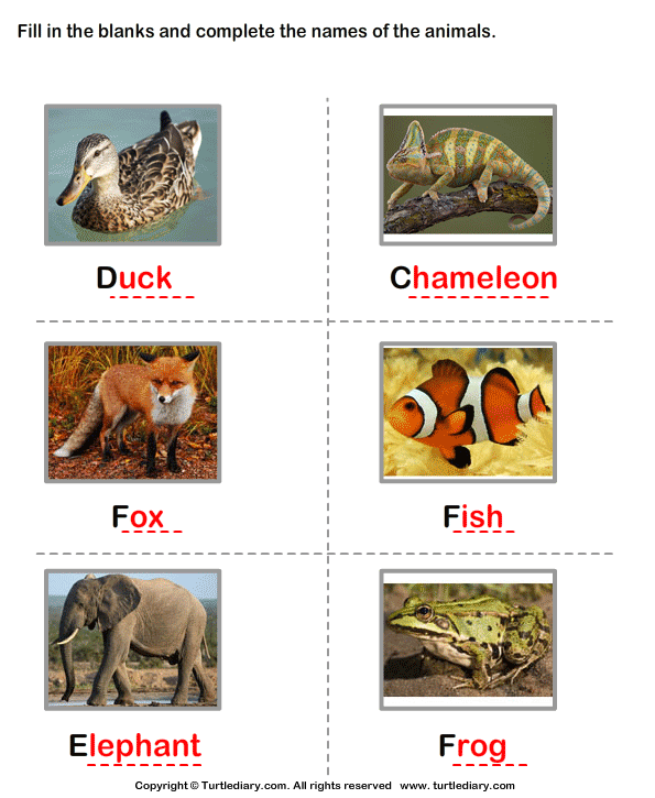 Write the Names of the Animals Answer