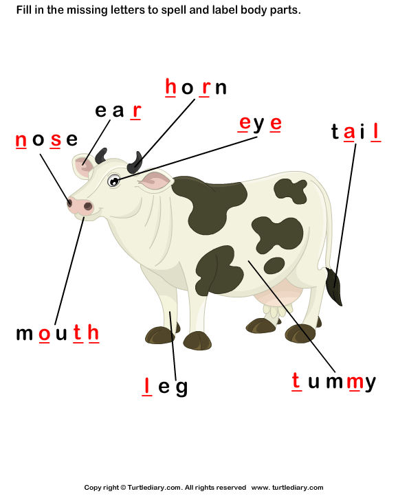 answer body parts of cow body parts of cow worksheet turtle diary